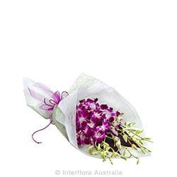 AMETHYST Orchid wrap AUS 811