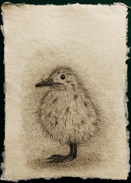 Seagull Chick drawing