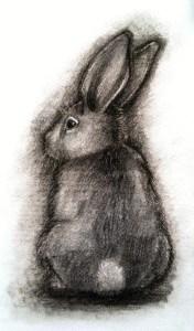 Rabbit charcoal drawing