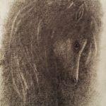 wild pony drawing