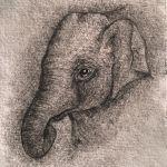 Elephant calf drawing