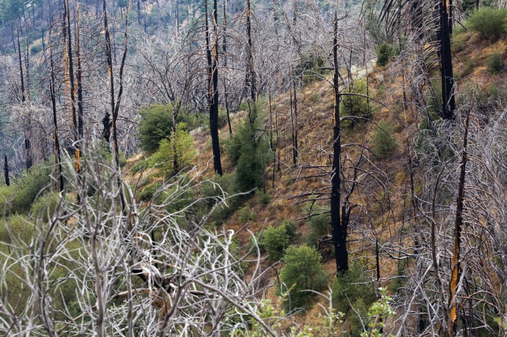 burn area from 2007 fires