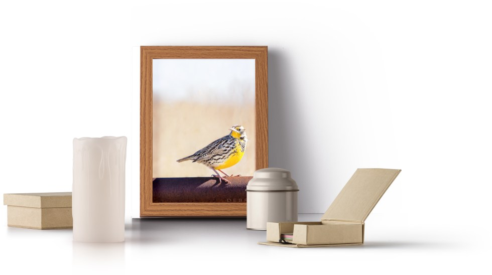 shop fine art landscape prints gifts debra gail photography