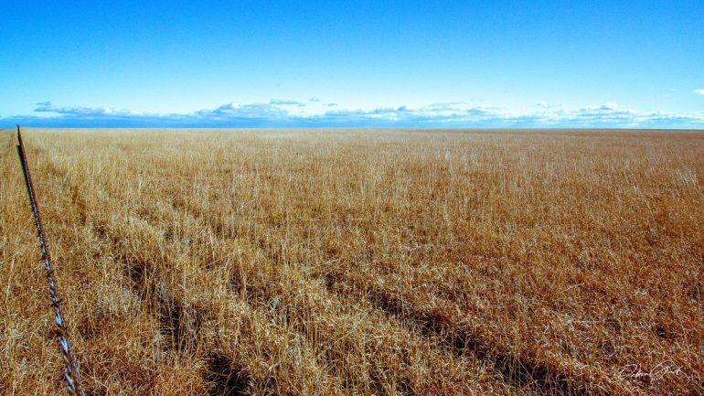 early sprint blue skies grass field flint hills debra gail
