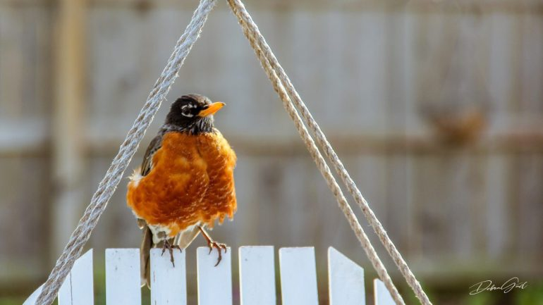 robin bird sitting in feeder