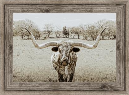 longhorn wall art framed debra gail