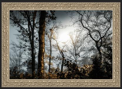 foggy woodlands best photography debra gail ornate wood frame