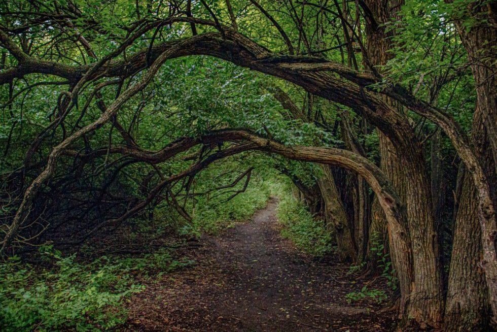 interior designers Tree Tunnel 0499 WOODLANDS
