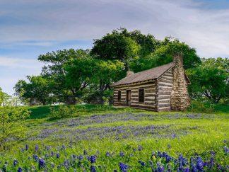 log cabin wall art rustic texas bluebonnets