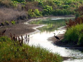Waterfowl Wetlands Heron Wall Art debra gail