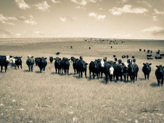 Cattle Herd Rustic Wall Art
