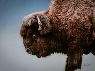 Spiritual Buffalo Print Wall Art No. 98 wholesale ranch collections rustic bison91