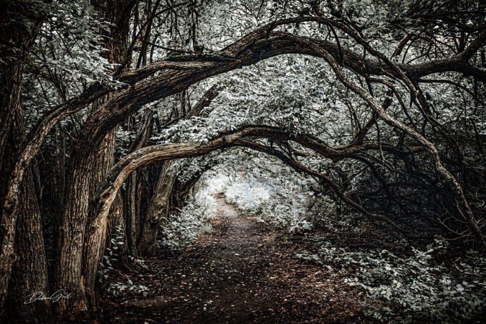 Woodland Walking Path Wall Art No. 10499