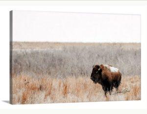 american buffalo wall art ranch furnishings wall art wholesale nature landscape photography winter snow bison