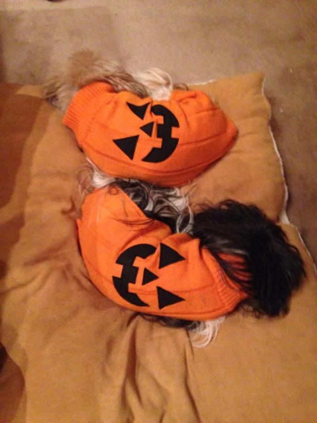 SleepingPupsPumpkin3
