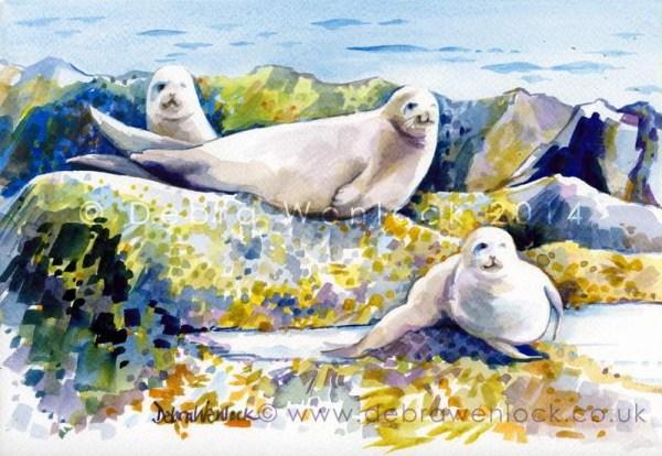 Copeland Island Seals by Debra Wenlock