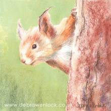 Red Squirrel, soft pastel painting by Debra Wenlock