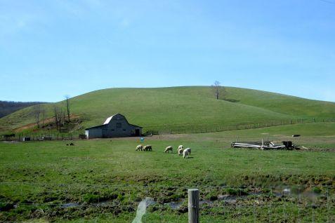 SheepGrazingCeres