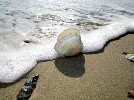 BeachSeaShellFoam