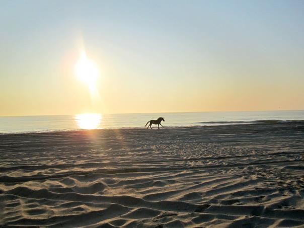 BeachStallionRun