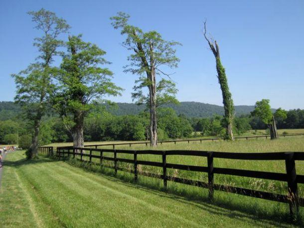 Virginia Wine Country Half Marathon