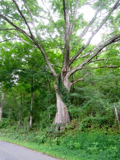 TreeBesideRoad