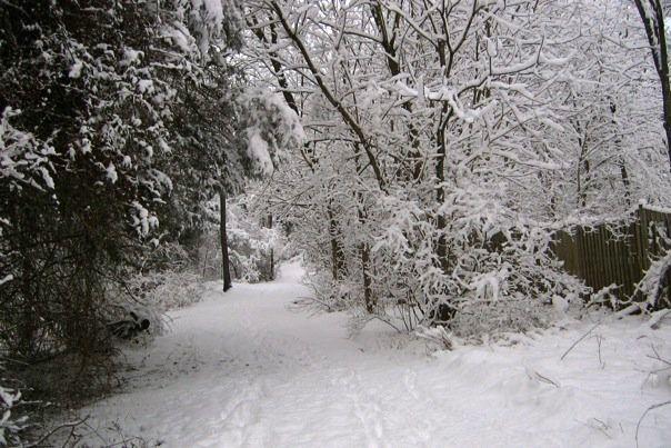 SnowyRunTrail