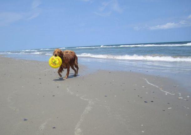 DogOnBeachWithFrisbee