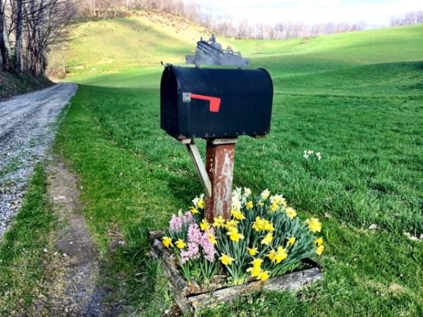 SpringBulbsMailbox