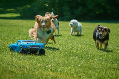 Dogs Chasing RC Car at the Dogwoods Mount Horeb WI