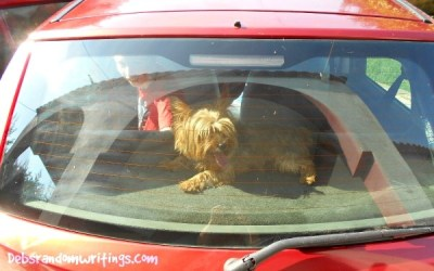 Dogs love getting into cars.