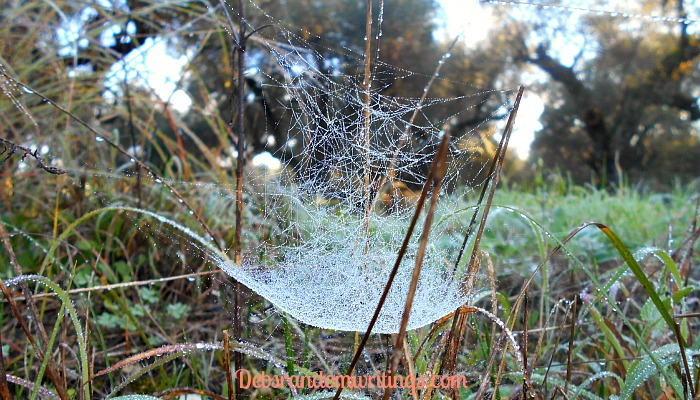 the intricacy of a cobweb