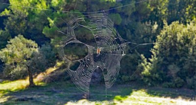 A Ginormous Spiders' Web!