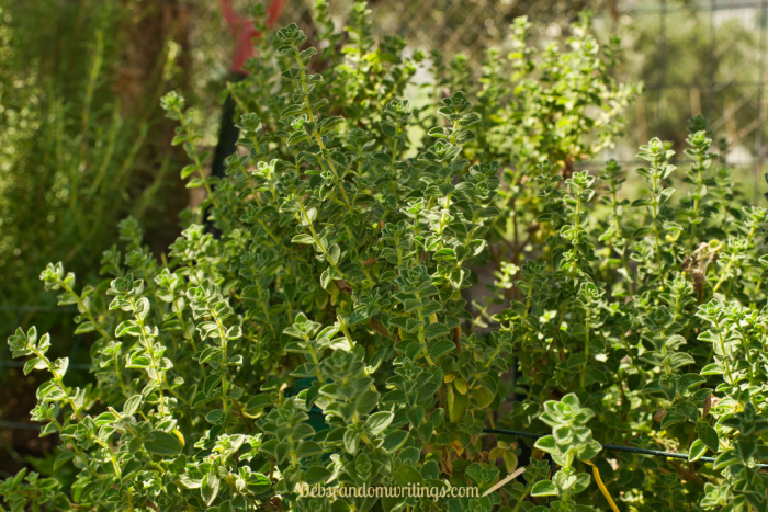 Oregano is one of those herbs that last on year, but it's still worth freezing leaves for winter use.