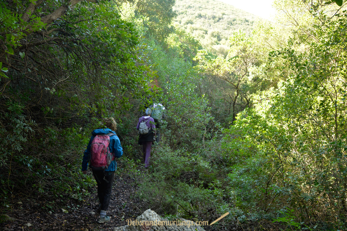 Hikers making their way through undergrowth on Zakynthos.