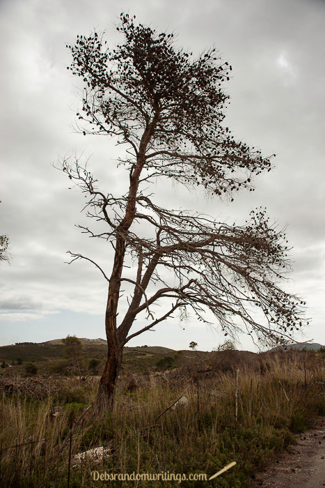 A silhouette of a burned tree on a dry landscape.