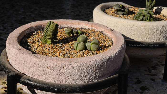 Home made concrete flower pots containing succulents