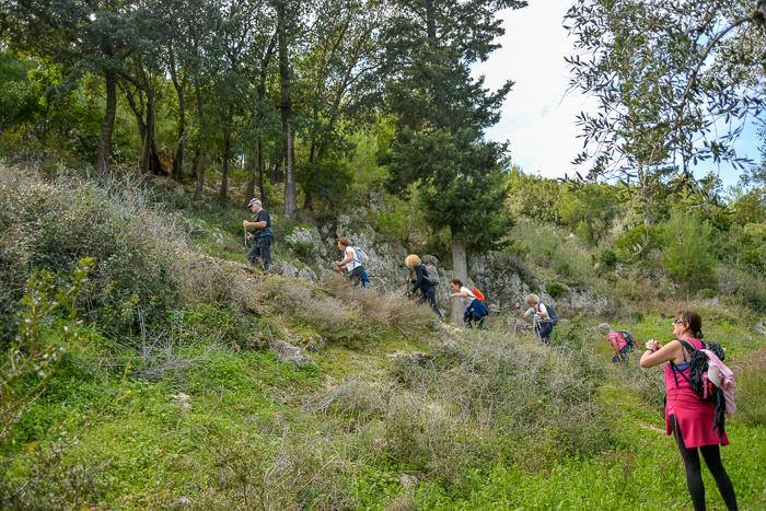 A line of hikers walking up a steep trail. Trees. Green grass. Bushes.