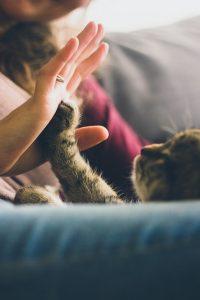 cat high five woman