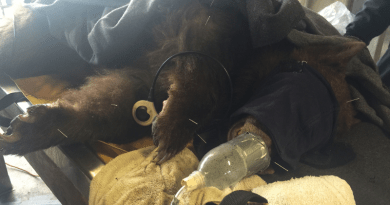 Veterinarians Torture Animals With Alt Med After California Wildfires