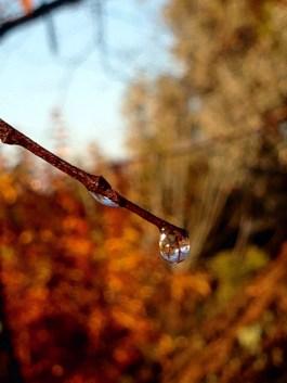 Droplet of dew
