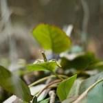nespresso_insect_03