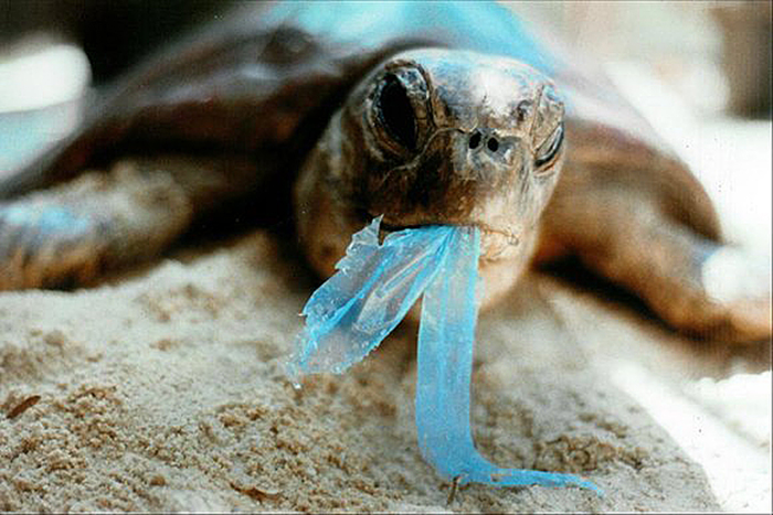 Comox Valley lags the world without ban on plastic bags