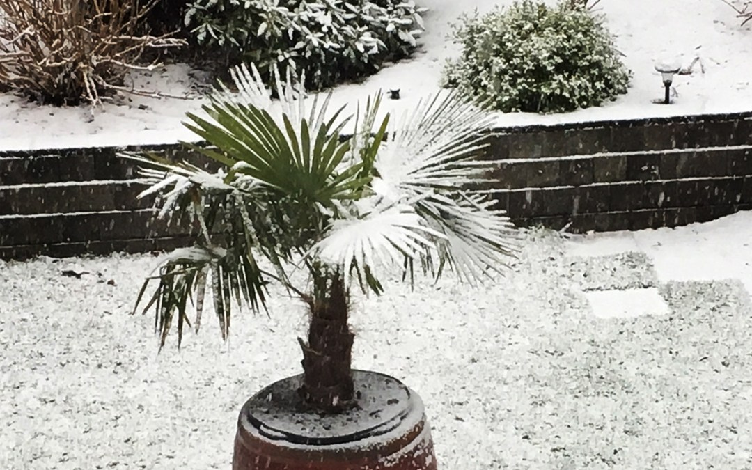 The snow is falling … but it won't last