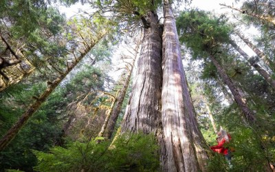 5 days left to influence BC's key forest practices legislation