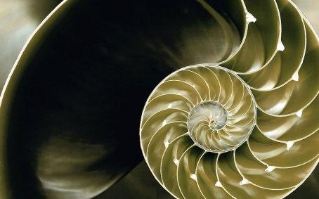 Un coquillage dont la forme est dictée par Phi