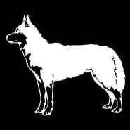 husky decal
