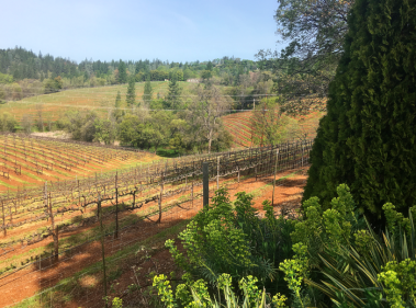 Boeger Vineyards, Placerville, CA