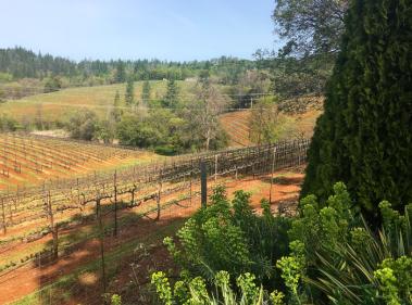 Boeger Vineyards, Placerville, CA