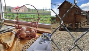 Fresh eggs at Destiny Ridge Vineyard tiny houses